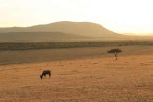 maasai mara,masterofthemoment,nature,photography